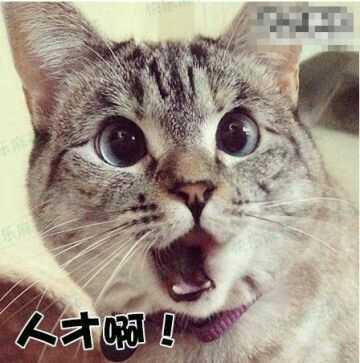 超可爱的汉字对话【笑得都快怀孕了】